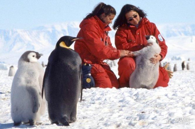 parka_penguins1a