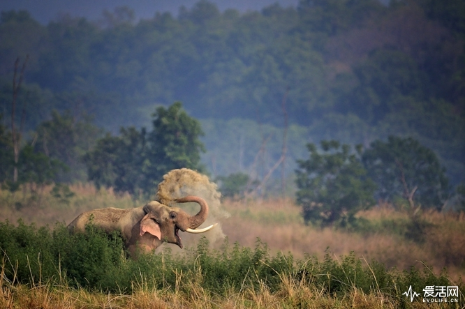 The Comedy Wildlife Photography Awards 2018 Anup Deodhar Pune India Phone: 9822777362 Email: anupdeodhar@gmail.com Title: Smiling Ele Caption: Smiling Ele Description: Happy elephant in Corbett national park. Animal: Indian elephant Location of shot: Corbett National Park - Uttarakhand