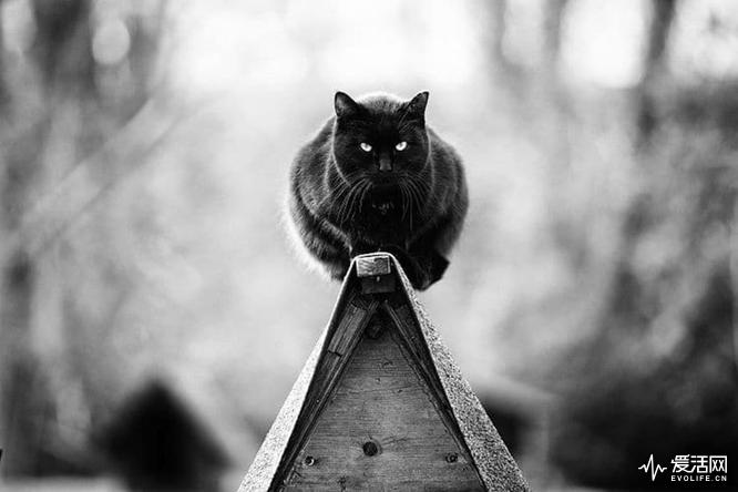 monorail-cats-sabrina-boem-1