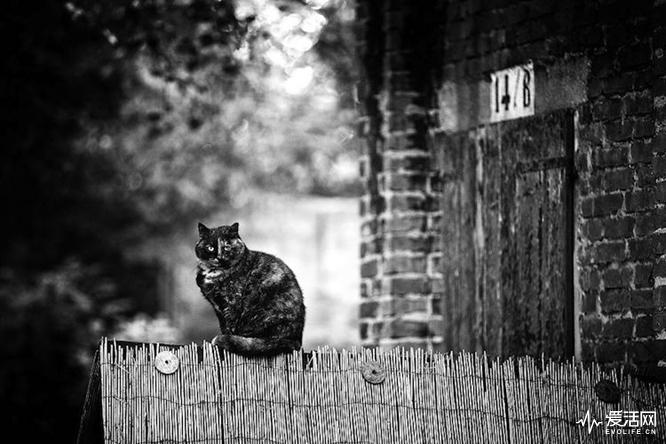 monorail-cats-sabrina-boem-3