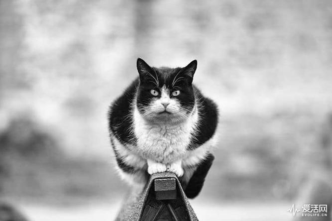 monorail-cats-sabrina-boem-6