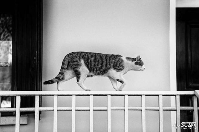 monorail-cats-sabrina-boem-8